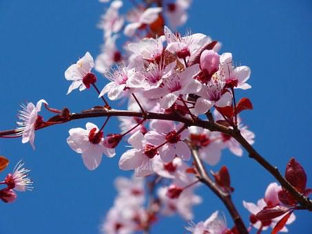 【2020年更新】花見に行こう!!鎌倉のおすすめ桜スポット10選