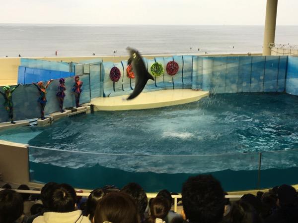 新江ノ島水族館でアクアンに会いに行こう。ドルフェリアのレベルが高すぎて脱帽。