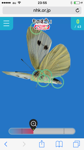 IMG 4341