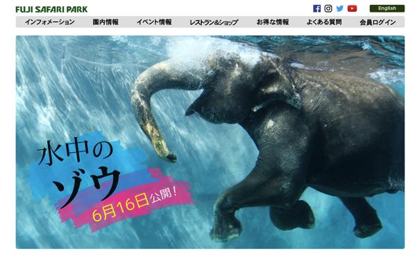 【山梨】富士サファリパークの水中ゾウに子連れ一家が釘付けになった