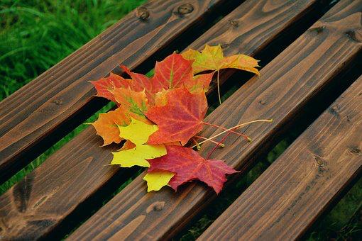 【鎌倉】東慶寺で紅葉をみよう。場所、見頃はいつ?