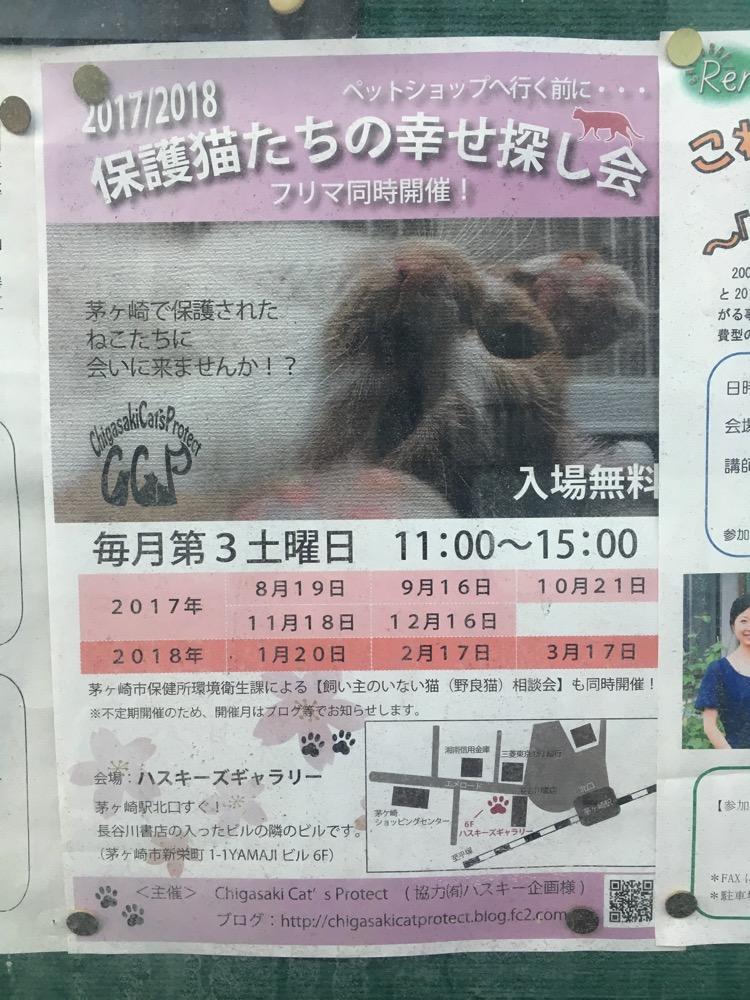 【茅ヶ崎】保護猫たちの幸せ探し会は毎月第3土曜日開催。フリマもあるみたい。