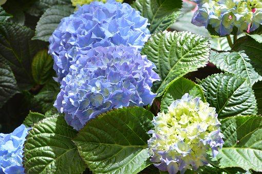 【藤沢】第13回親水公園まつりが2019年6月1日(土)2日(日)に開催!!紫陽花も色づく頃。